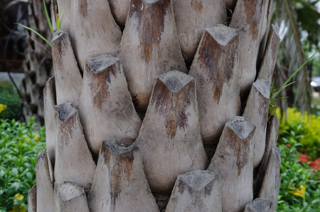 Close up of the bark of a palm tree photo