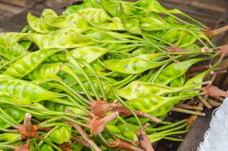 stinking: The fresh Parkia is tropical stinking edible beans, Thai style tropical fruit, Thailand