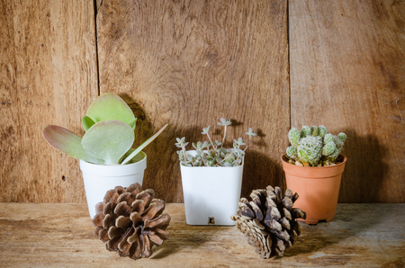 types of cactus: the Small different types of cactus plants on wooden shelves Stock Photo