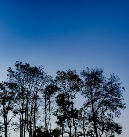 tree texture: the Tree silhouettes and sky blue.