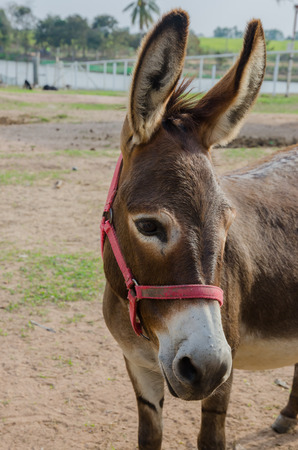 portrait of a donkey in farm. donkey in zoo.