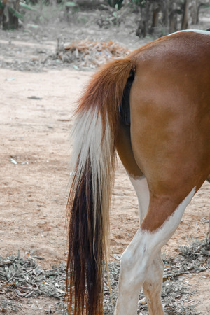close up of horse tail in farm