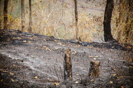forgetfulness: forest after fire