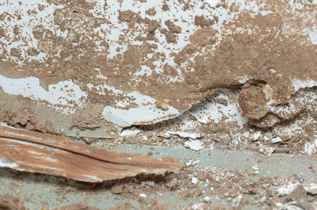 damage control: The wooden walls are being eaten by termites. Stock Photo