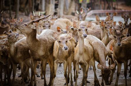 Herd of deer in open zoo Stock Photo