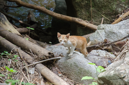 feral: Homeless cats live in the jungle.