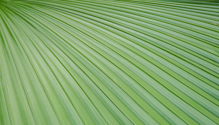 Close-up photo of palm leaves used for a background