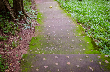 rain forest walk way in national park