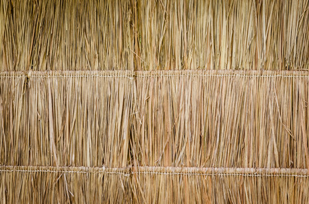 Wall of bulrush thatch-covered.Hay or dry grass background