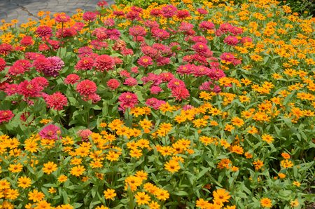 Colorful Flowers in the plots