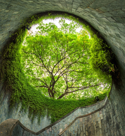 no entrance: The tree over tunnel walkway at Fort Canning Park and Penang road., Singapore