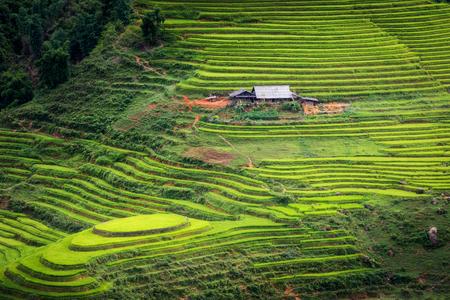 curve road: Beautiful scene of rice fields and terrace on daylight sunshade at Sapa, Vietnam. Stock Photo
