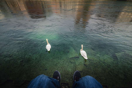Close-Up View of Tourist Man is Relaxing Beside Riverside in Zurich City, Switzerland. Traveler Man is Having Fun and Chilling While Looking Swan in The Lake. Leisure Activity and Lifestyles Concept 写真素材