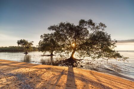 Landscape Scenery View of Coastal Forest and Beautiful Trees at Sunrise, Nature Panorama and Tranquility of Horizon Seascape. Silhouette of Mangrove Tree With Sunbeam Light.