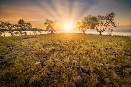 Seascape Coastal Scenery and Meadow View at Sunrise, Natural Landscape Mangrove Trees and Meadows Plant With Morning Sunlight of Sea Coastline. Nature Background