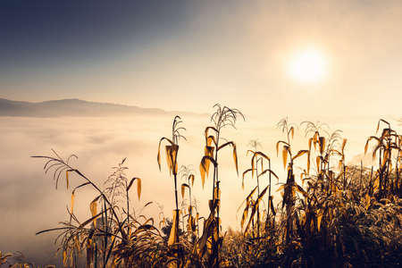 Corn Field and Landscape Meadow at Morning Sunrise Background, Rural Agriculture Fields With Mountain Hill and Fog on Silhouette Sunshine. Nature Backgrounds