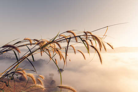 Close-Up of Grass Flowers Against Mountain Range During Morning Fog at Sunrise, Abstract Flower Grass With Landscape Scenery in The Mist Background.