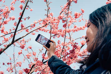 Tourist Woman Traveling and Taking Photos on Mobile Phone Camera With Sakura Flowers, Woman Journey Taking Sakura Blossoming on Her Phone During Travel Vacation Trip. Spring Cherry Blossom Season.