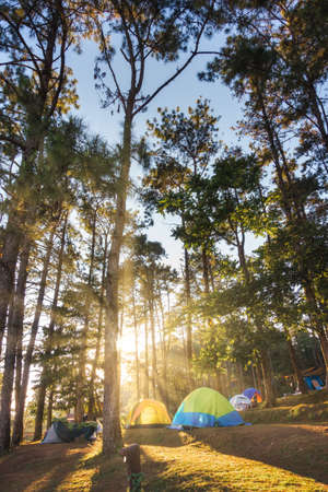 Tourist Camp Tent and Terrace Under Pine Trees Forest During Sunrise, Field Campground for Camping Vacation Adventure Outdoors and Leisure Activity. Backpacking Tourism, Travel Adventures Lifestyles