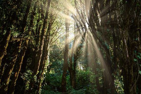 Natural Woodland and Lush Foliage at Sunrise, Beautiful Scene of Nature Landscape With Morning Sunlight. Wonderland of Greenery Wood Plants in The Tropical Forest, Environment and Ecosystem of Trees.