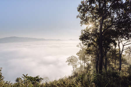 Mountain Hill Scenery View and Foggy  at Morning Sunrise, Beautiful Scene of Nature Landscape With Woodland in The Mist. Natural Mountains Tree Plants and Environment Ecosystem of The Forest