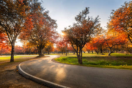 Landscape Scenery of Autumn Fall Leaves Forest Background, Colorful of Autumn Trees Leaf With Footpath Road at Sunset Scene. Woodland Environment With Autumn Leaves Foliage of Public Park. Nature Park Banco de Imagens