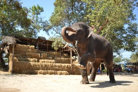 greet eyes: lovely big elephant, Ayutthaya Thailand Stock Photo