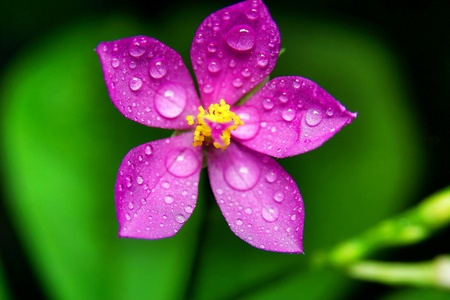 colour: Flower with water droplets