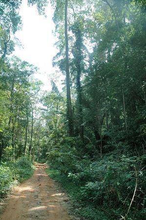 Jungle trekking path in a rainforest with greeneries around