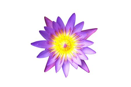 Isolated purple water lily lotus with clipping path on white background