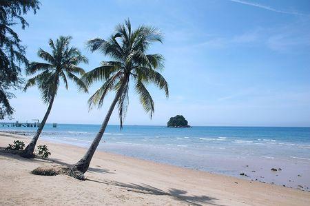 Palm tree on a sandy tropical beach photo