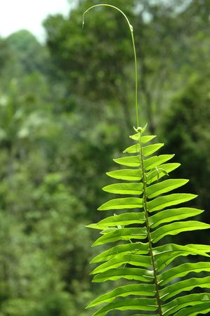 Fern fronds  leaves against a rainforest background Stock Photo