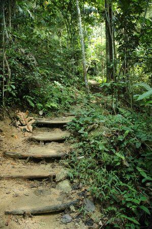 Nature trek path adventure in tropical jungle Stock Photo