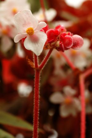 Pink flower with shallow depth of field