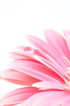 daisy flower, shallow dof photo