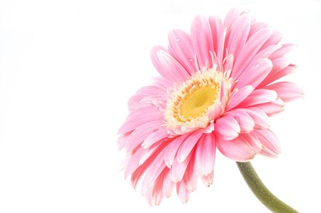 daisy flower, space for messages photo