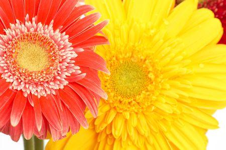 beatiful: beatiful daisy flowers, close up Stock Photo