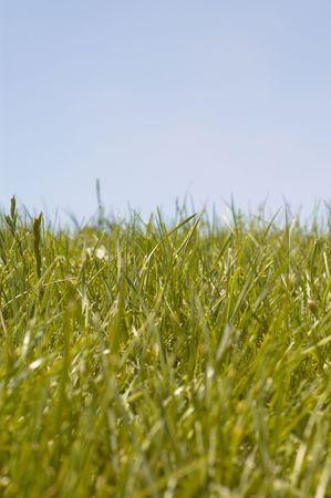 grass Stock Photo - 499996