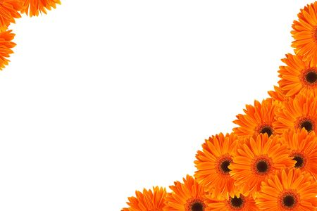 gerbera: orange daisy flower half frame on white, space for messages