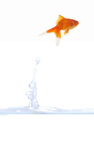 beautiful goldfish escaping from bowl Stock Photo