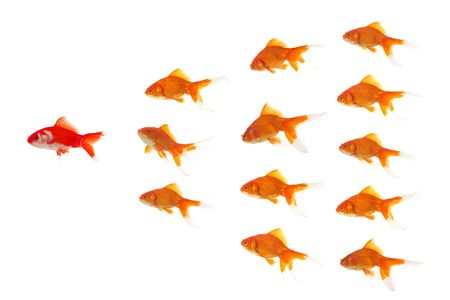 goldfishes in formation, red goldfish is leading Stock Photo - 898406