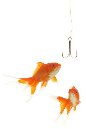 fishhook: goldfishes looking to the fishhook