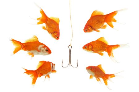 goldfishes looking to the fishhook photo