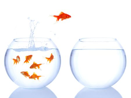 different goldfish jumping for a better house Stock Photo - 898413