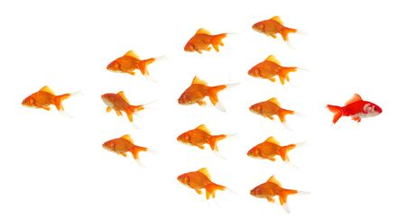 red goldfish going to a different direction than the group Stock Photo - 898415