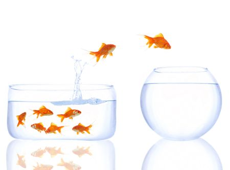 fish tank: goldfishes waiting their turn to jump to a better place Stock Photo