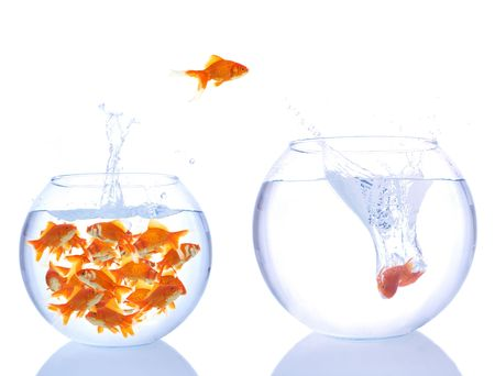 lots of goldfishes in a small bowl, and some are jumping for a better place Stock Photo - 955757