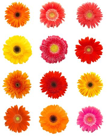colorful daisy flowers for your designs on white Stock Photo
