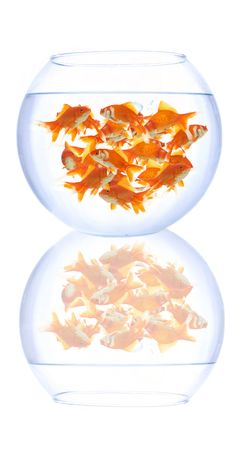 empty fish bowl on white background photo