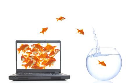 lots of goldfishes in laptop, jumping to real life